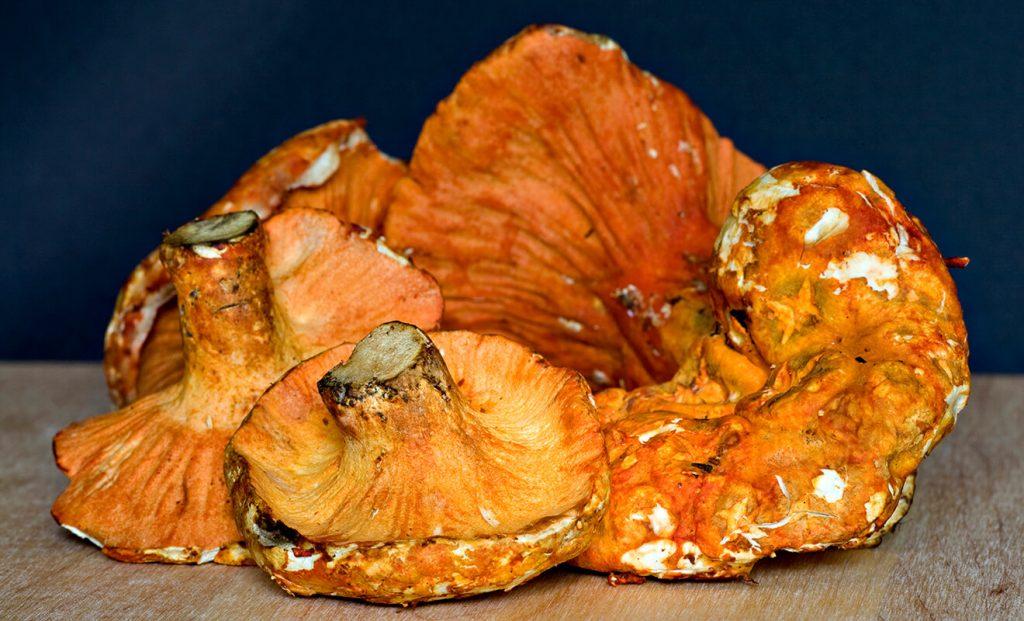 Lobster Mushroom recipe